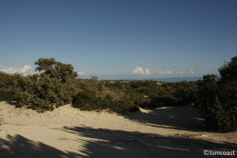 Coastal dunes with Juniperus spp., November 2010