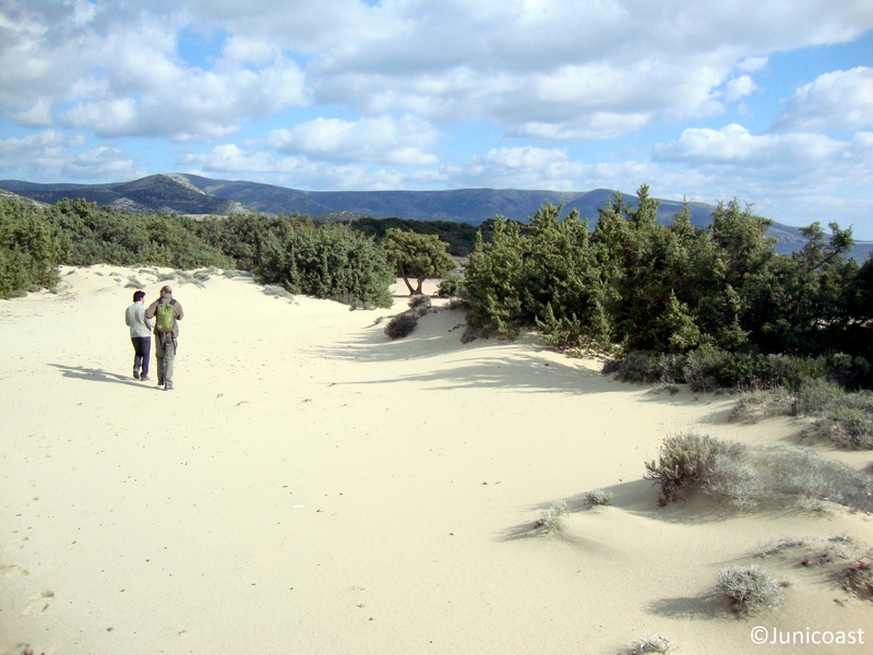 Coastal dunes with Juniperus spp., Naxos island, March 2012