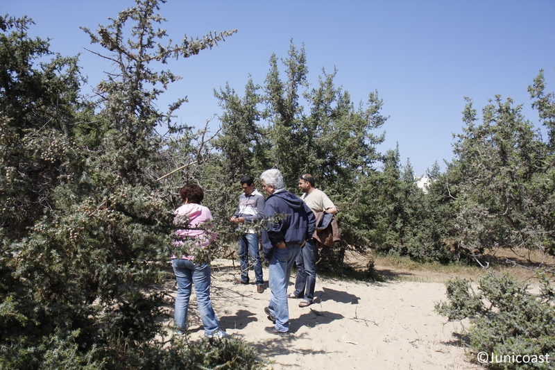 Field visit to the coastal dunes with Juniperus spp. <br>with representatives from municipality of Naxos island, April 2013