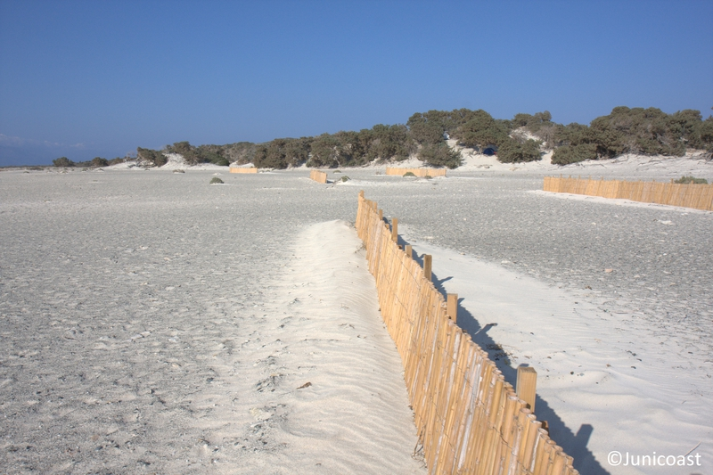 "Fences for ""Fore dune"" creation, July 2013"